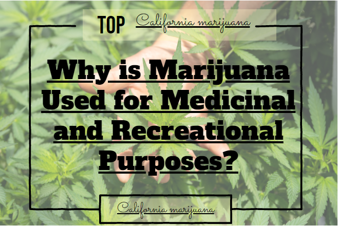 Why is Marijuana Used for Medicinal and Recreational Purposes?